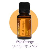 ワイルドオレンジオイル02